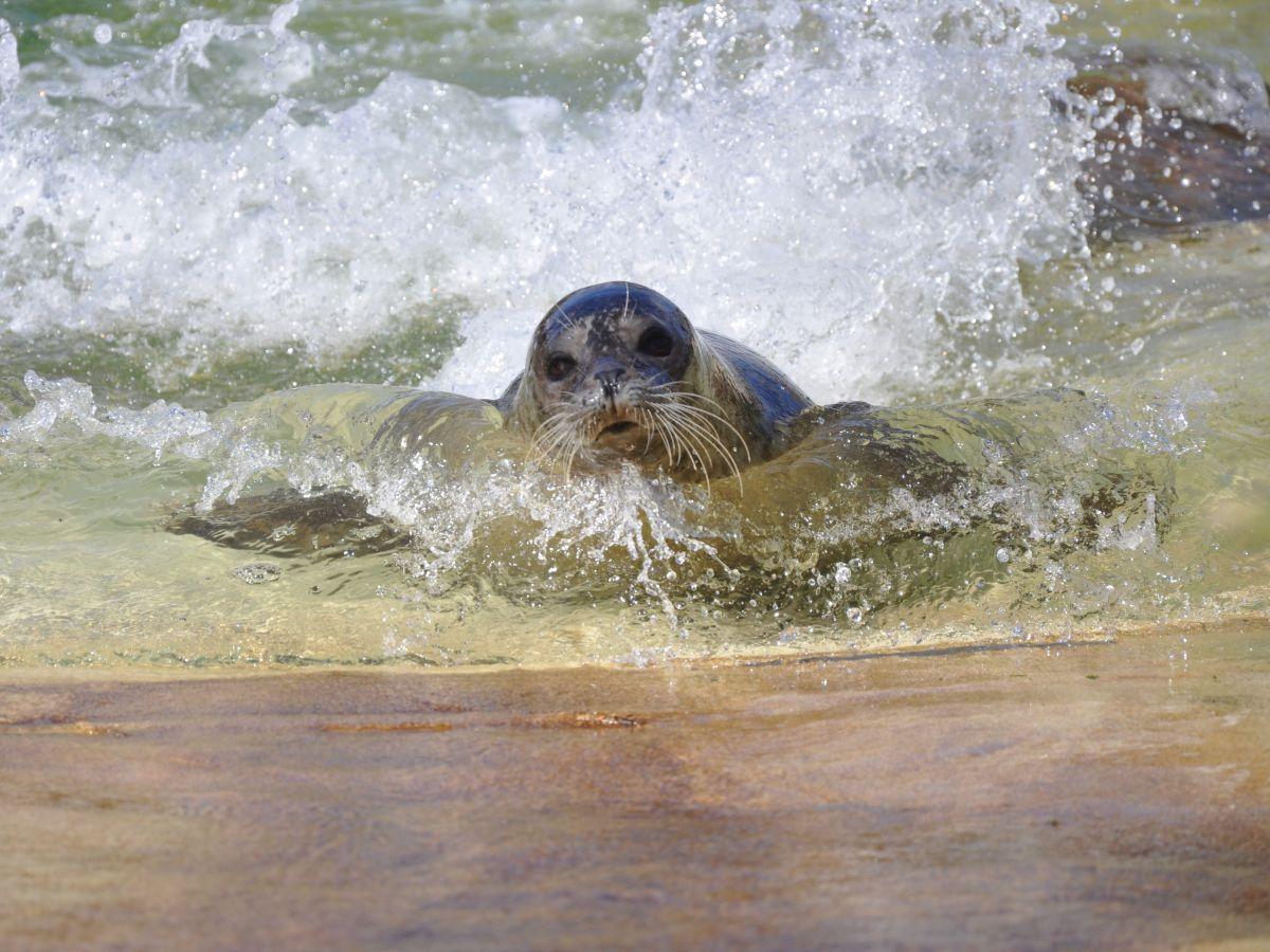 Lilli in Wasser