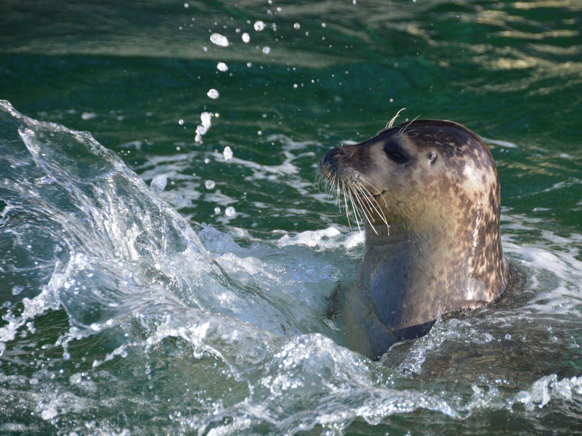 Snorre im Wasser