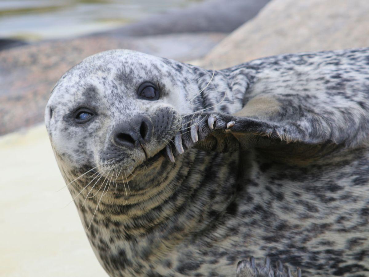 Seehunddame Deern verstirbt im Alter von 35 Jahren