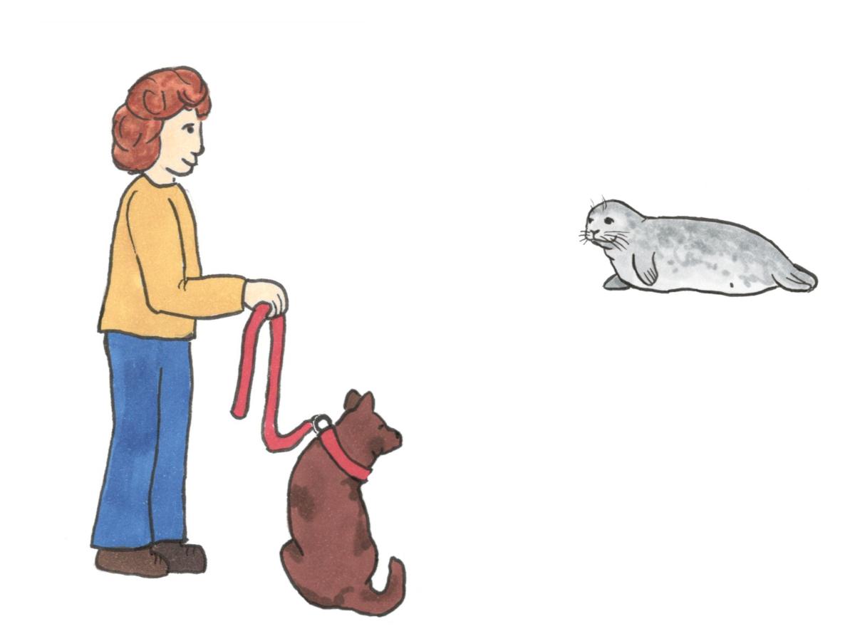 hund anleinen